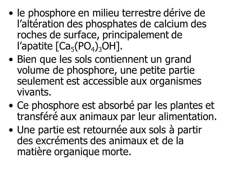 le phosphore en milieu terrestre dérive de l'altération des phosphates de calcium des roches de surface, principalement de l'apatite [Ca5(PO4)3OH].